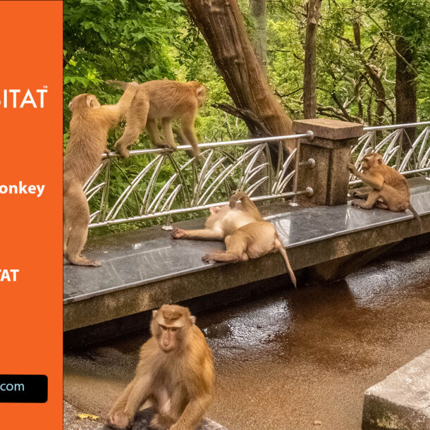 Where to Find Monkey in Phuket